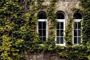 Ściana budynku porośnięta bluszczem. W ścianie budynku są trzy okna w kształcie półkola i trzy okna w klasycznym kształcie.